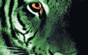 tiger_1767251c